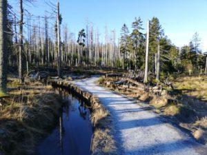 Laufweg entlang des Abbegrabens.